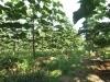 agroplan-bijeljina05