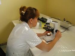 medialta mikroskop