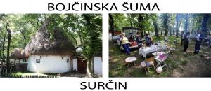 surcin-bojcinska-suma