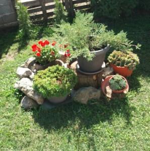 rasadnik-biljana-dobanovci-surcin-cetinari-cvece-rasad-proizvodnja-dvoriste-uredjenje-travnjak-siblje-ukrasnobilje-eksterijer