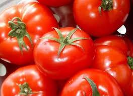 paradajz za zimnicu obrenovac