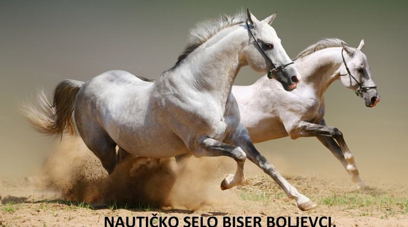 biserna-griva-donjeg-srema-2019-surcin-belgrade-festivals-horses-exhibition-history-competition-fair-izlozba-vasar-mojabaza2