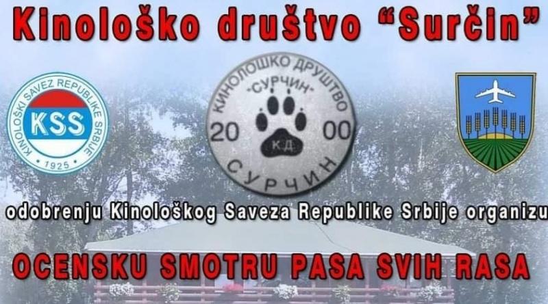 most beautiful serbian dogs competition dogloverseurope srbija smotra najlepsi psi odgoj uzgoj pasa kinolosko drustvo srbije nauticko selo biser boljevci surcin mojabaza